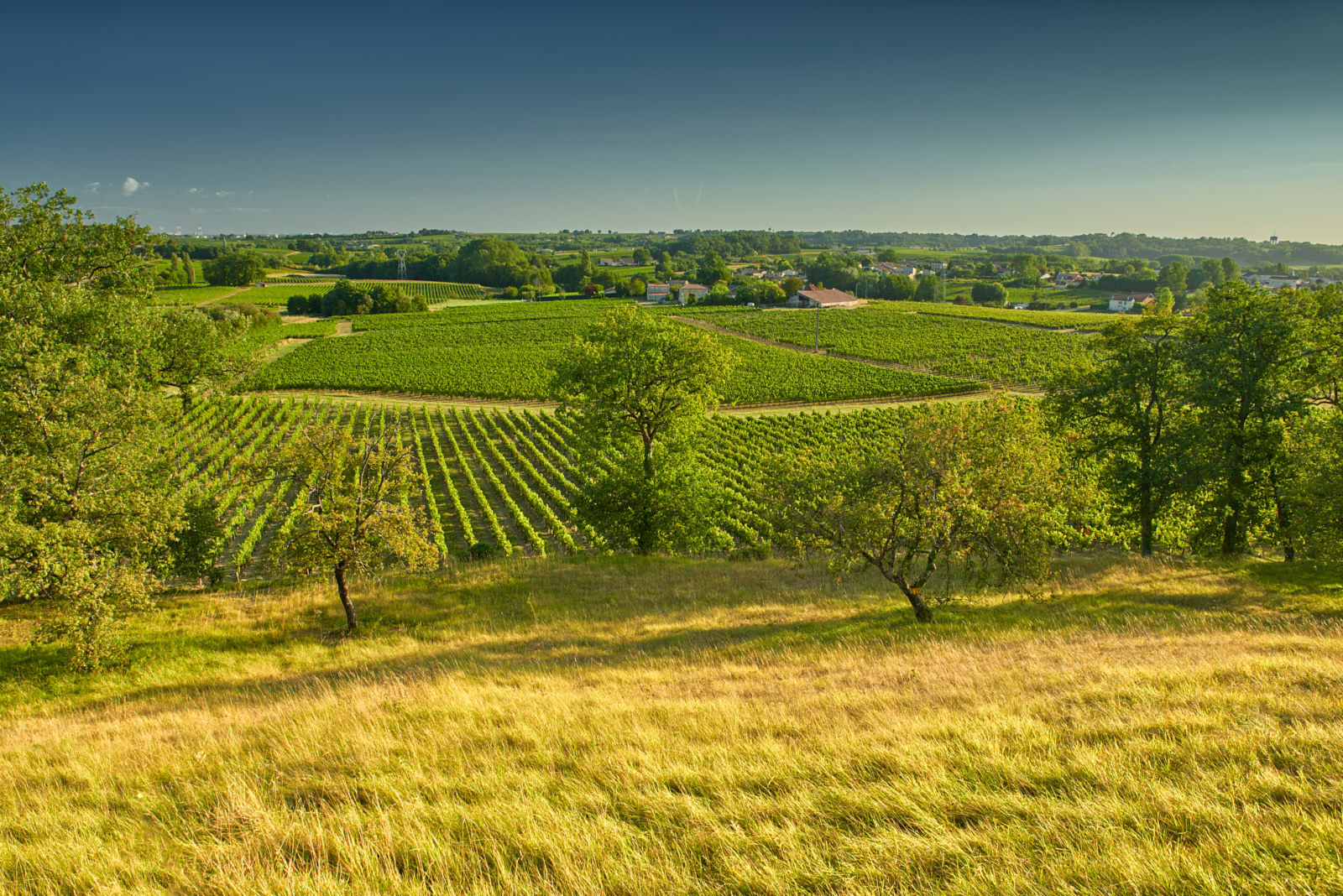 Photographie de vignoble