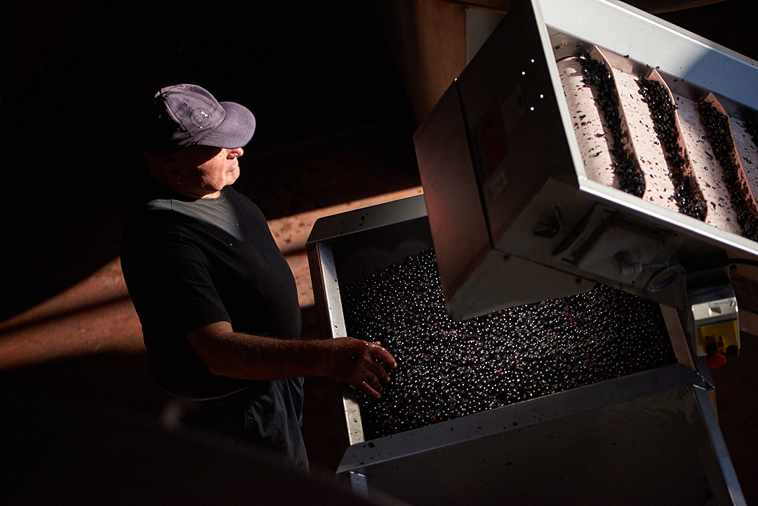Photographe de reportage vigne et vin